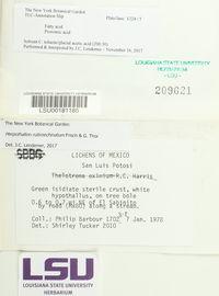 Herpothallon rubroechinatum image