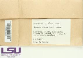 Physcia aipolia image