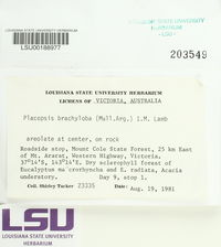 Placopsis brachyloba image