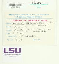 Heterodermia diademata image