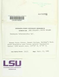 Baeomyces heteromorphus image