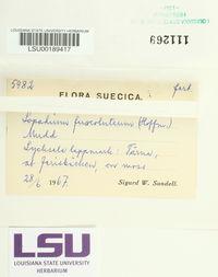 Brigantiaea fuscolutea image