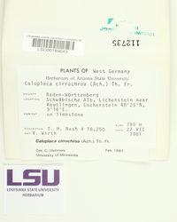 Leproplaca cirrochroa image