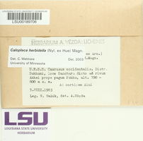 Caloplaca herbidella image