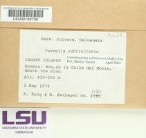 Parmotrema subtinctorium image