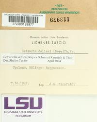 Cetrariella delisei image