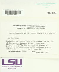 Image of Chaenothecopsis viridireagens