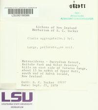 Cladia aggregata image