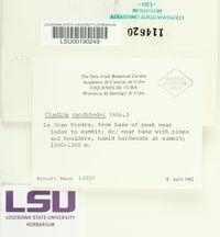 Cladonia sandstedei image