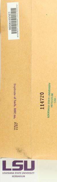 Cladonia stygia image