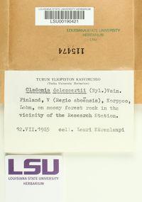 Image of Cladonia delessertii