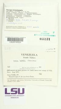 Image of Cladonia lopezii