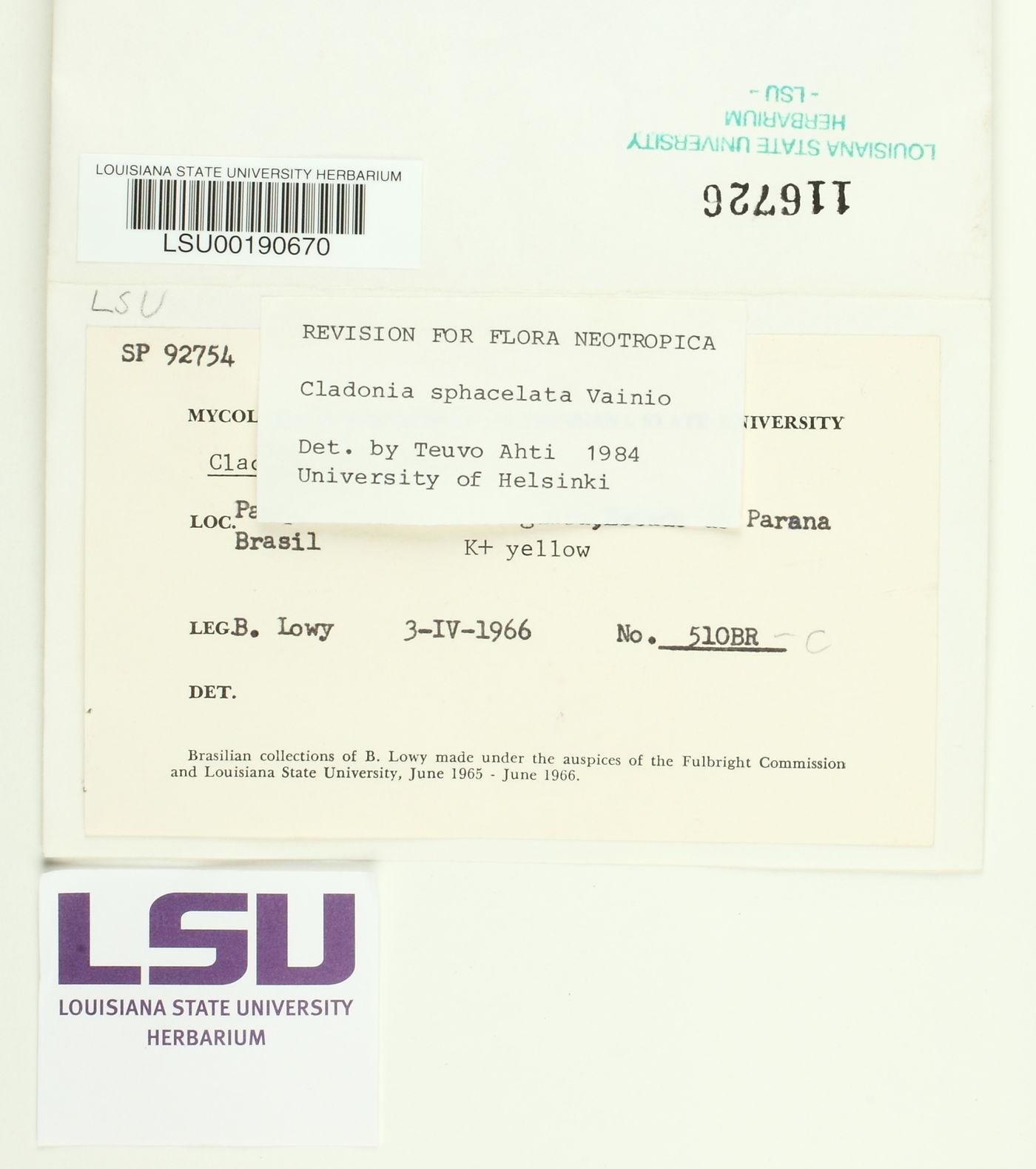 Cladonia sphacelata image