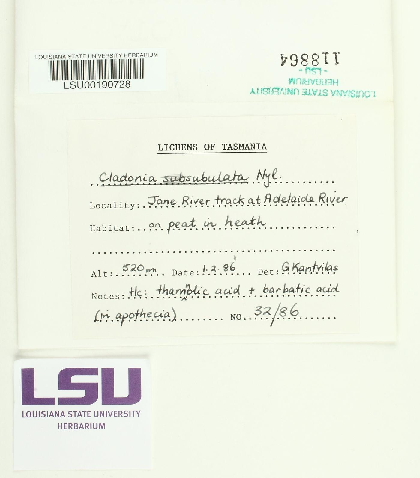 Cladonia subsubulata image