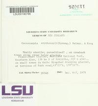 Coccocarpia erythroxyli image