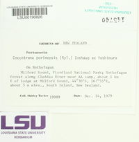 Coccotrema porinopsis image