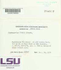 Coenogonium linkii image