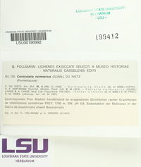 Cornicularia normoerica image