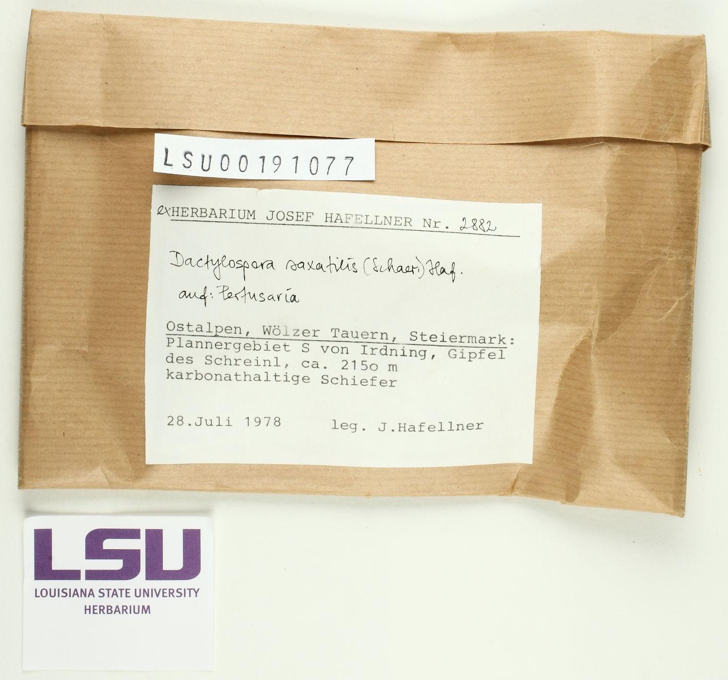 Dactylospora saxatilis image