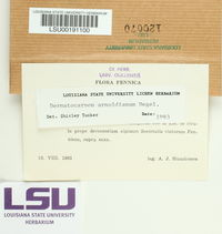 Dermatocarpon arnoldianum image