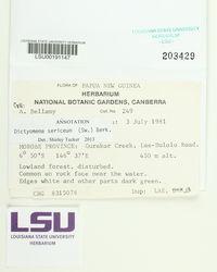 Dictyonema sericeum image