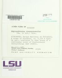 Diploschistes cinereocaesius image
