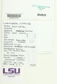 Enterographa subserialis image