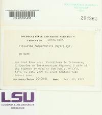 Image of Fissurina comparilis