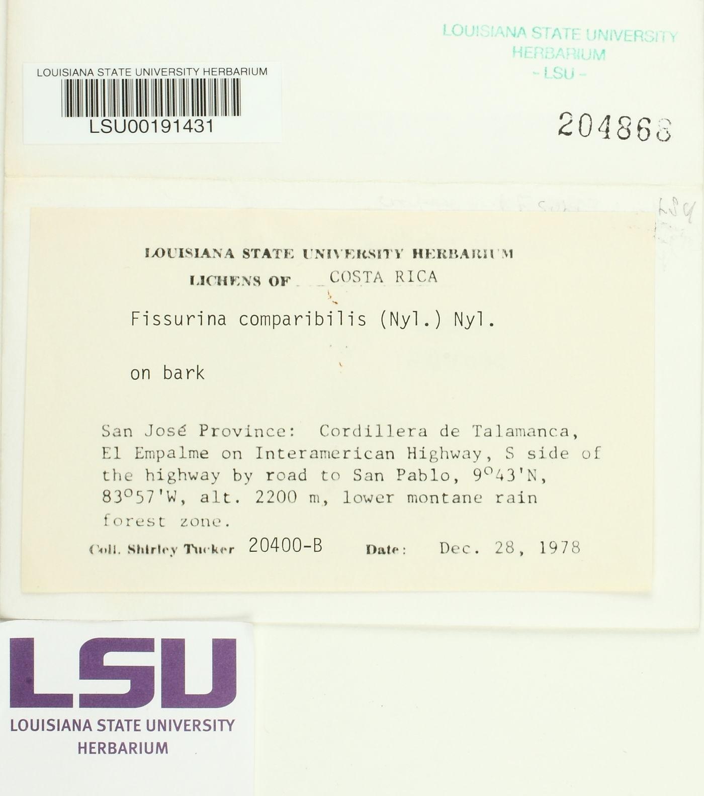 Fissurina comparilis image