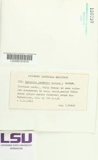 Gyalecta jenensis image