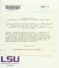 Image of Leucodermia circinalis