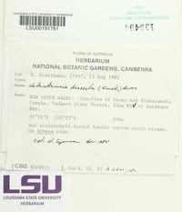Image of Heterodermia dissecta