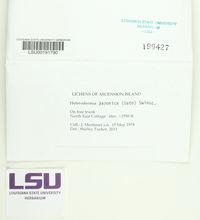 Polyblastidium japonicum image