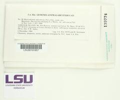 Heterodermia subcomosa image