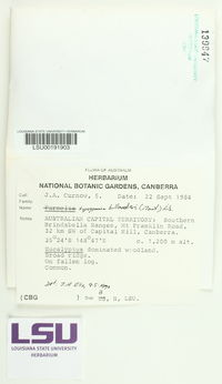 Hypogymnia billardieri image