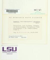 Image of Hypogymnia obscurata