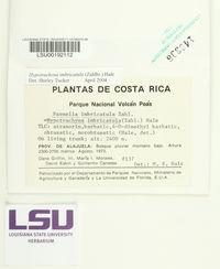 Hypotrachyna subgen. incertae_sedis image