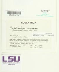 Hypotrachyna sinuosa image