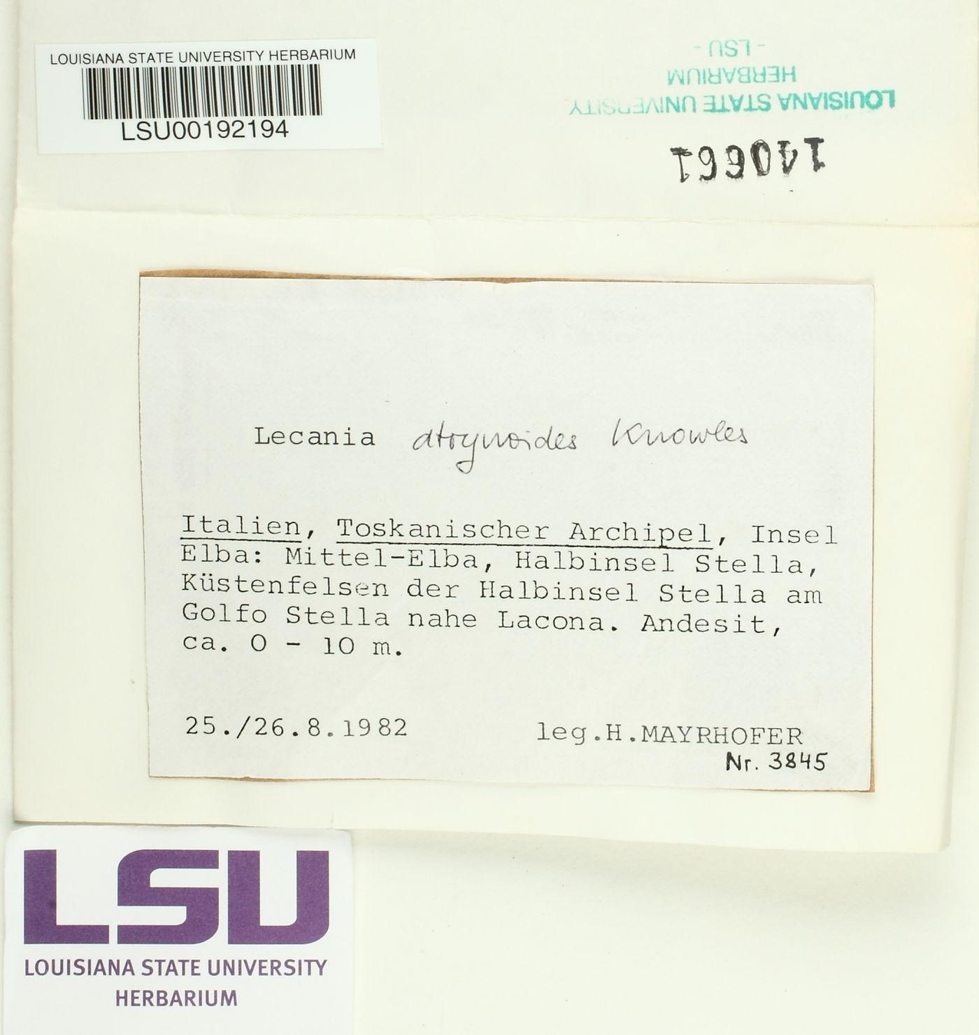 Lecania atrynoides image
