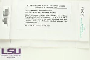 Lecanora actophila image