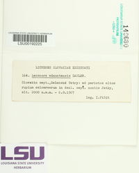 Image of Lecanora admontensis