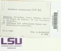 Lecanora frustulosa image