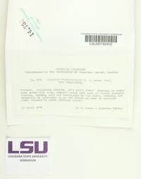 Lecanora pseudopinguis image