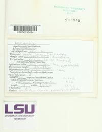 Lecanora saligna image