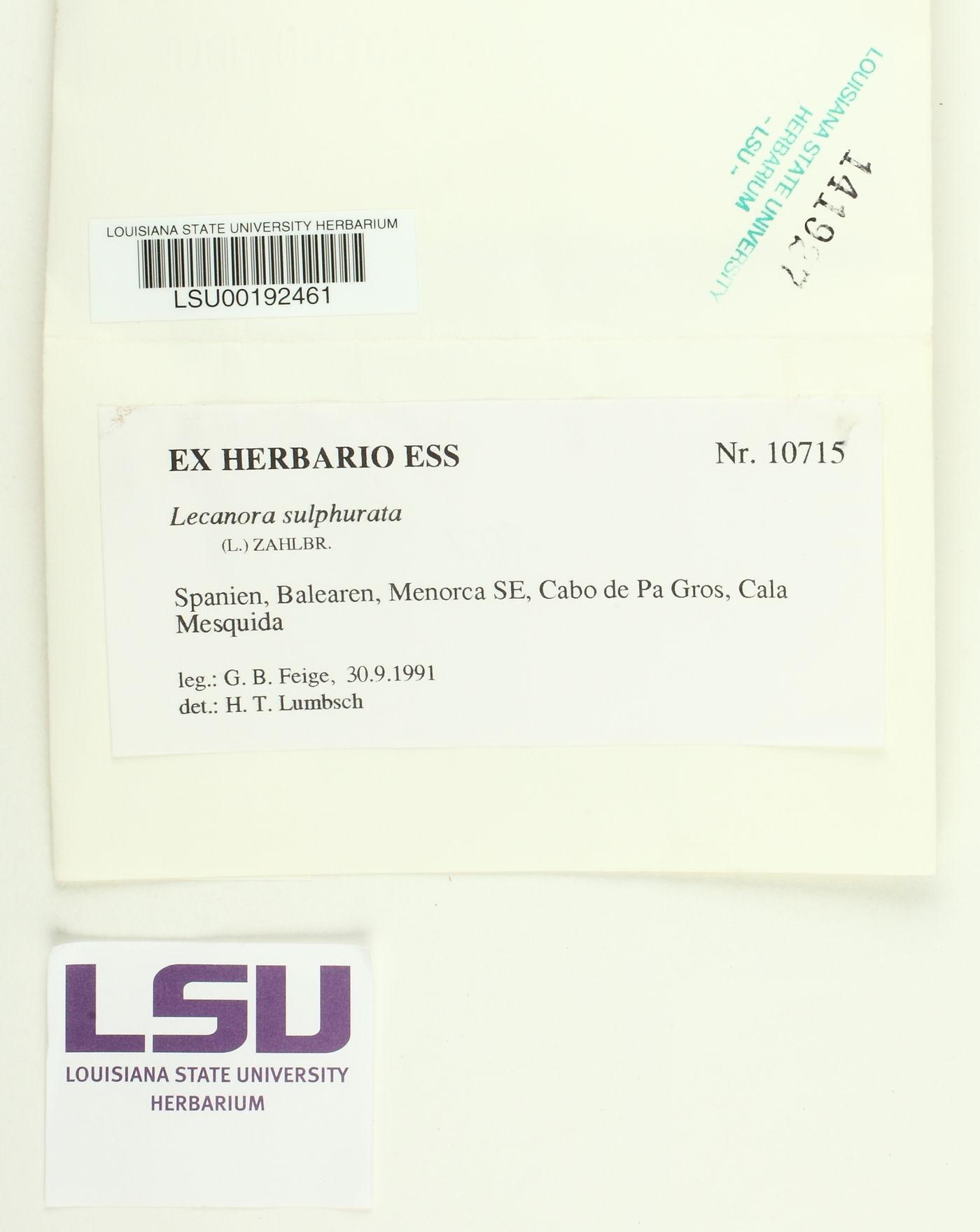 Lecanora sulphurata image