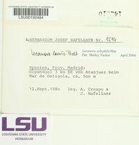 Lecanora xylophila image