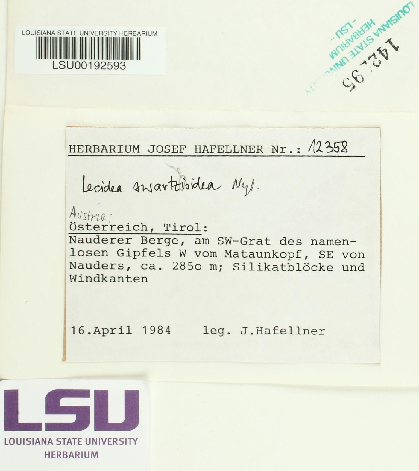 Lecidea swartzioidea image