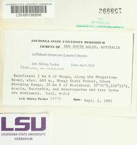 Leifidium tenerum image