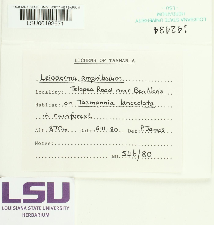 Leioderma amphibolum image