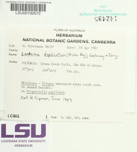 Image of Leioderma duplicatum